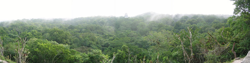 Tikal_Panorama_from_top_of_Pyramid
