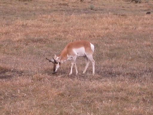 Deer-thing