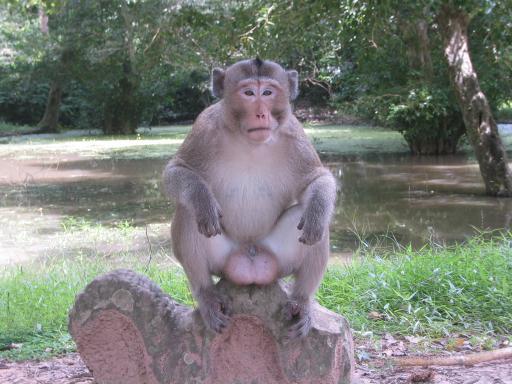 http://mreeve.com/wp-content/uploads/2004/05/monkey2.jpg